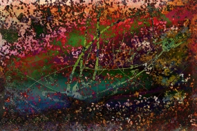 Farbenvielfalt 16