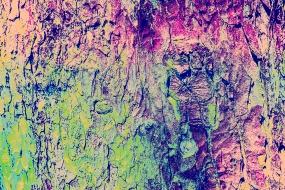Farbenvielfalt 20