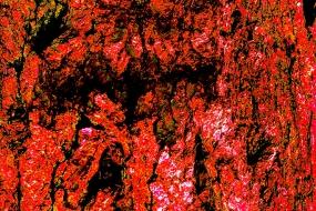 Farbenvielfalt 43